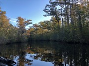 Fall Is Showing In The Swamp......10/7/2019