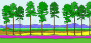 Ten trees, with farm in distance