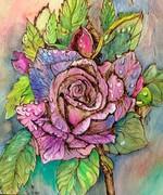 Purple rose pyro Sept 2019