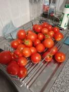 Bush ripened tomatoes