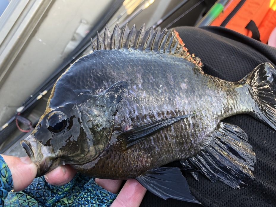 Wound Up With 27 Sunfish.....10/13/2019