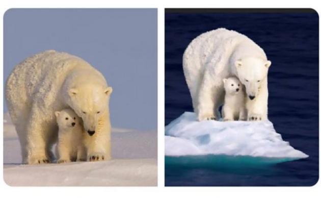 Polar Bear Photoshop Work