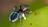 Arachnifauna