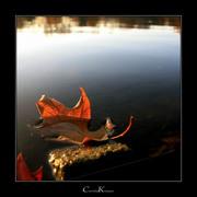 Autumnal Motif II