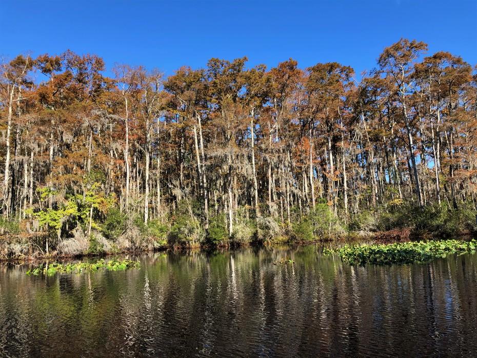 Scenic Albemarle Estuary in the Fall.......