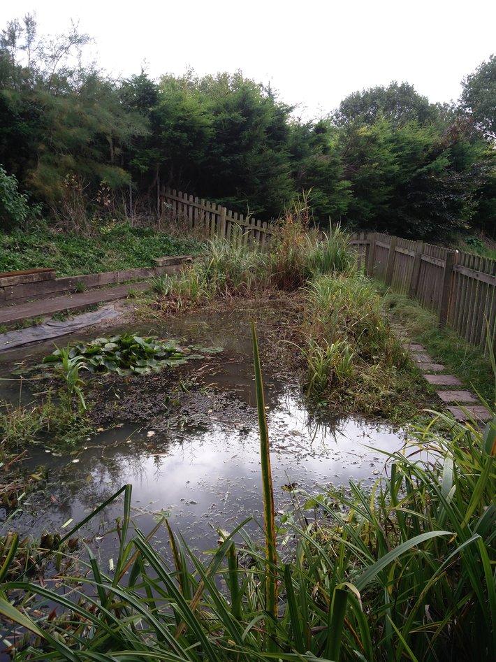Pond clearance 3  20.10.19