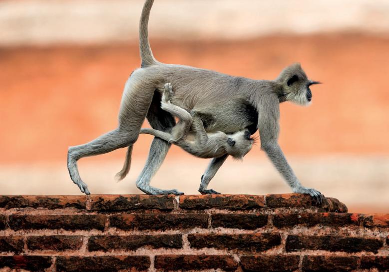 Indrukwekkend Anuradhapura