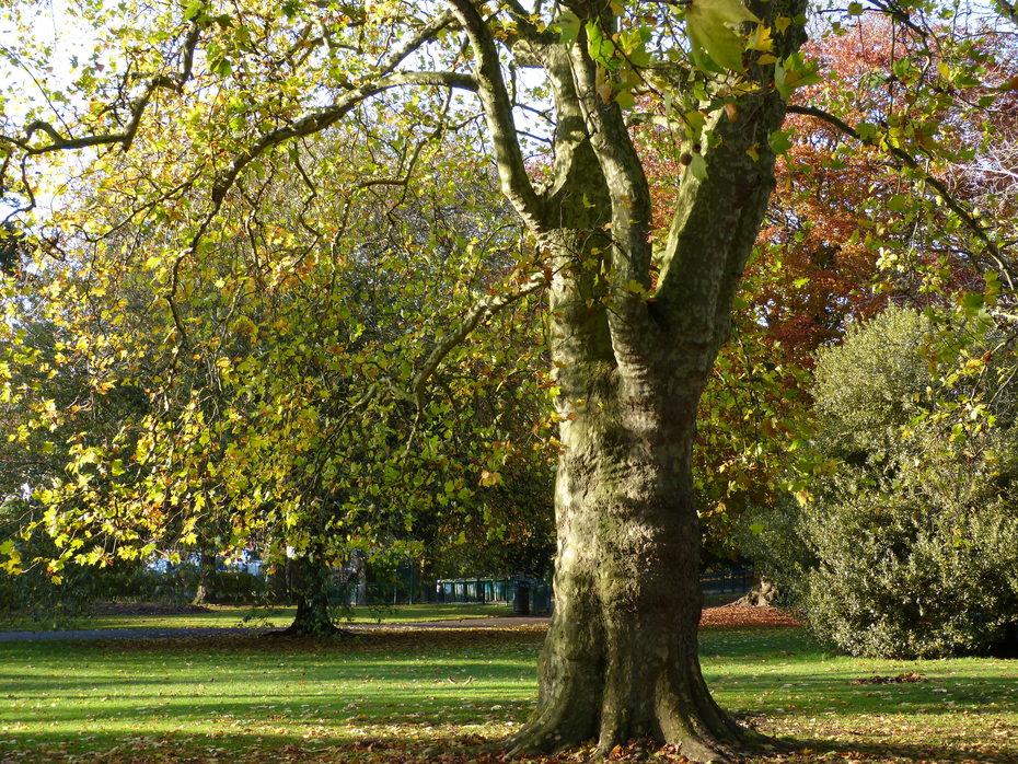 Autumn sunshine, Nov 7th '19