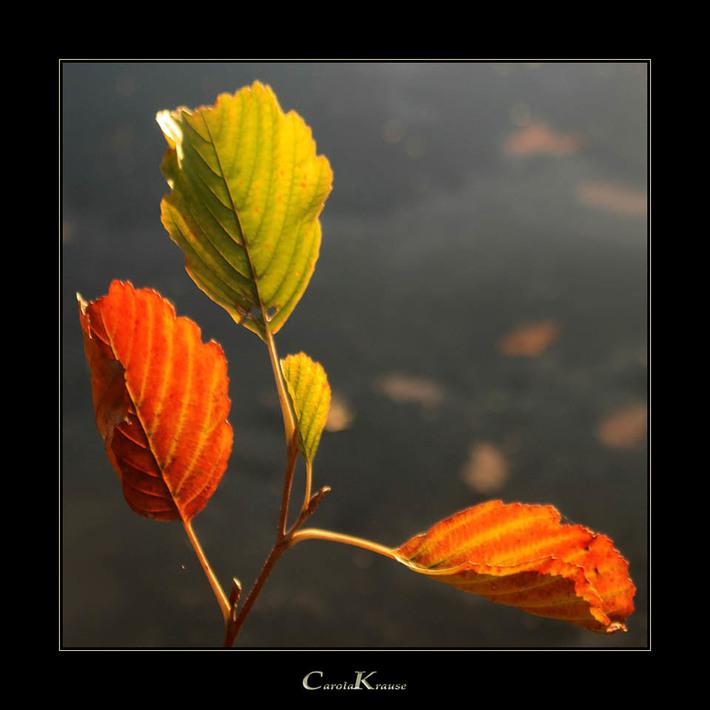 Autumnal Motif V