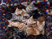 Our feline family