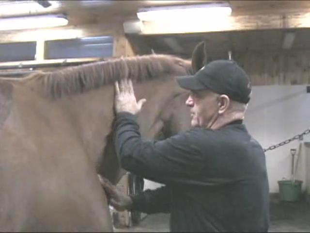 Equine Massage: Massaging a Horses Neck