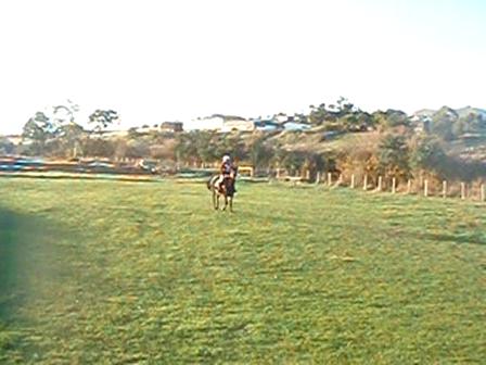 Trotting Horse Video