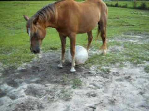 Horse Soccer Practice