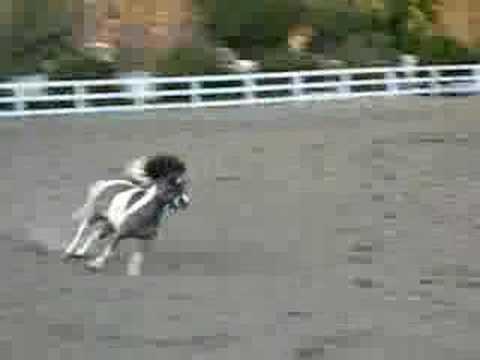 Free Jumping Mini!