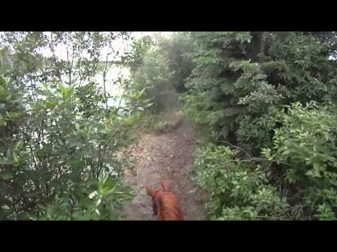 Alhambra Stables Cross Country Schooling Helmet Cam