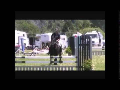 Zanzibar - Friesian Horse Show Jumping
