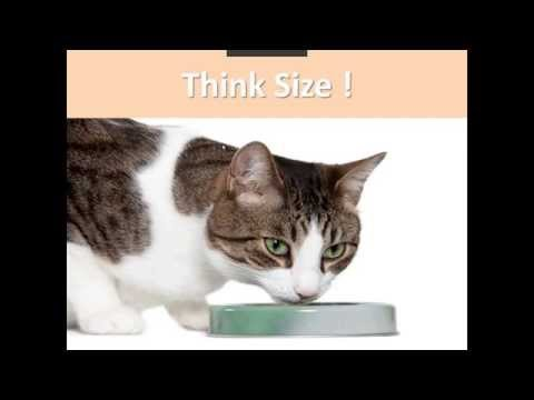 Feeding shelter cats & dogs : what you need to know