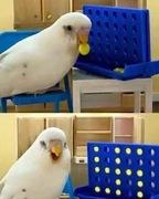 Bird Anti-Semite