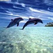 Évelyn Golfinho