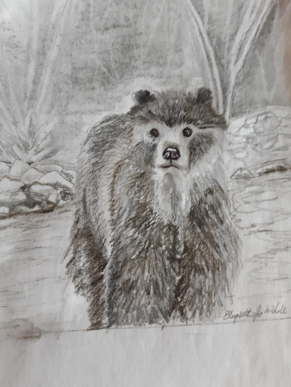 Baby bear quick sketch