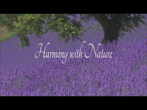 Harmony nature