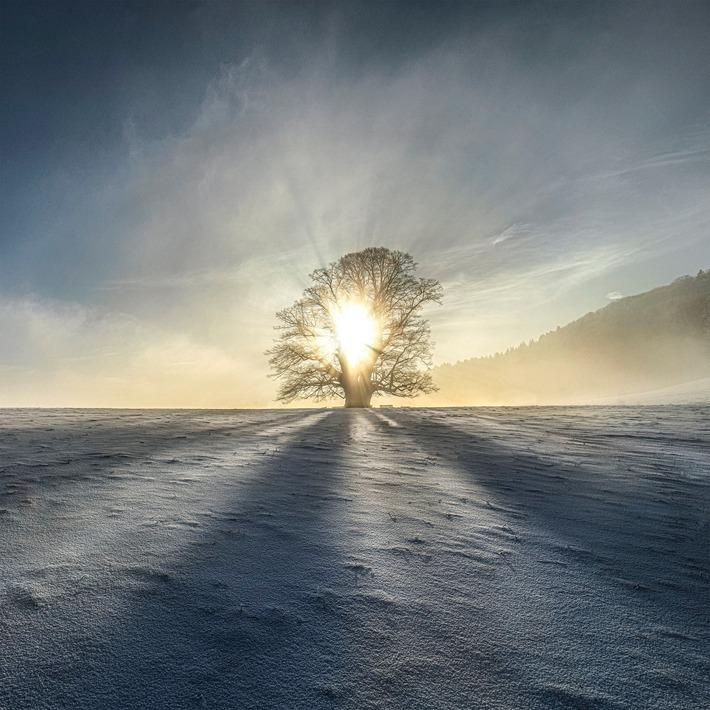 Universal tree