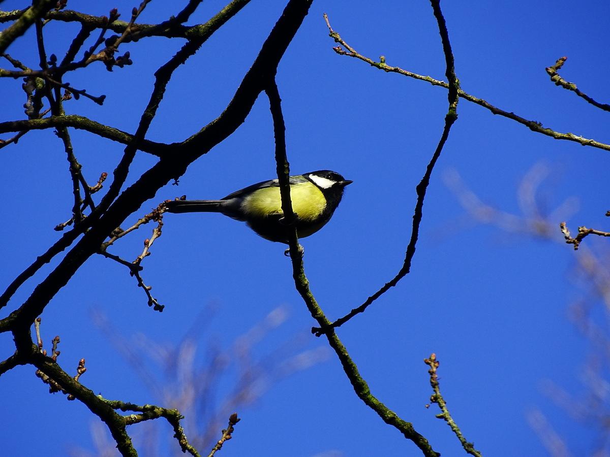 Vogelen in Het Groot Goor in Helmond