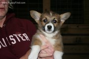 Picture of Emlyn From Breeder