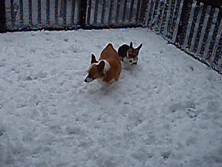 Mollys 1st Snow 11-13-2010