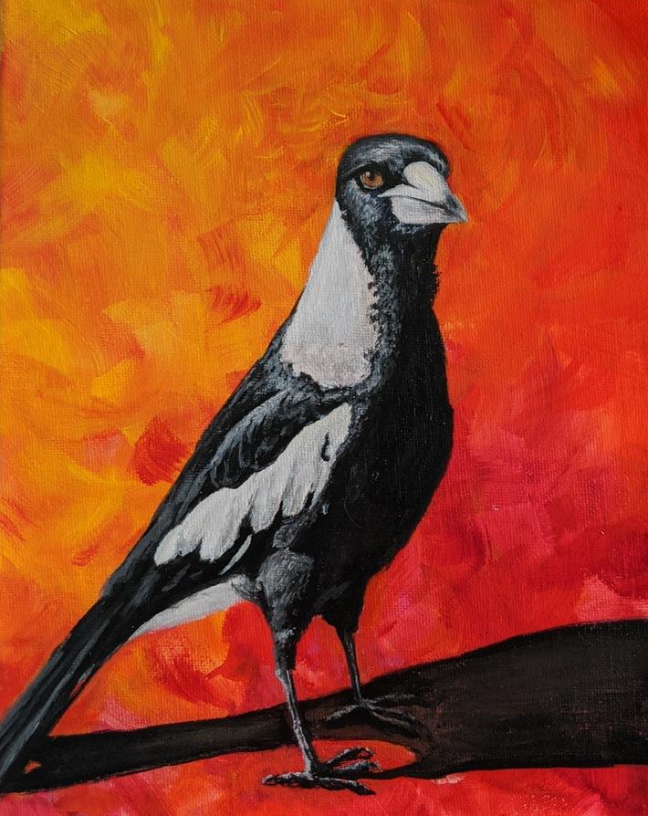 2020-02 Australia Magpie