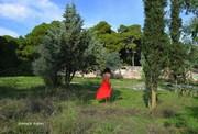 Ο κήπος βλέπει (4)