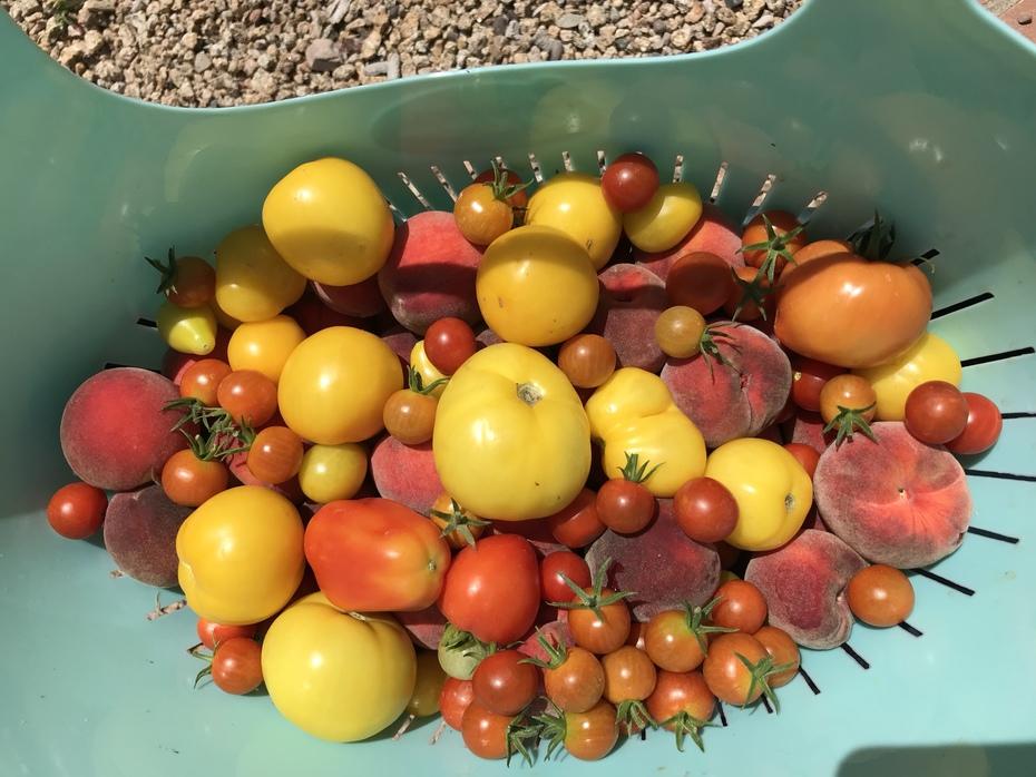 Garden tomatoes & peaches