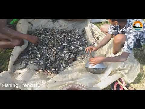 Traditional Fishing | Best fishing | BD Village fishing