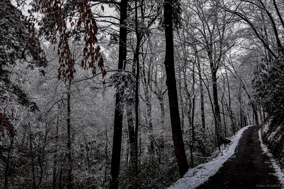 Roaring Fork Motor Trail, 2-21-20