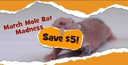 Save $5 at Liberty Science Center! – March Mole Rat