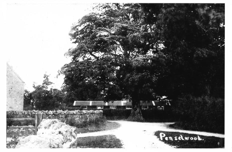 Village hut near the sycamore tree c1950