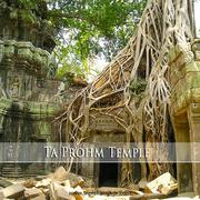 Ta Prohm Temple 01 720x720