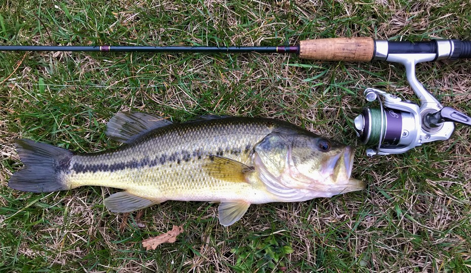 15'' Largemouth Bass (3-26-20)