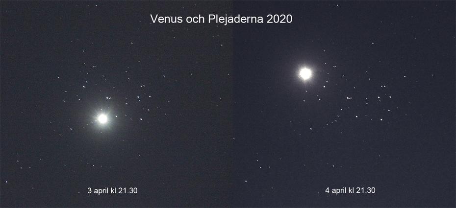 Plejaderna och Venus 2020
