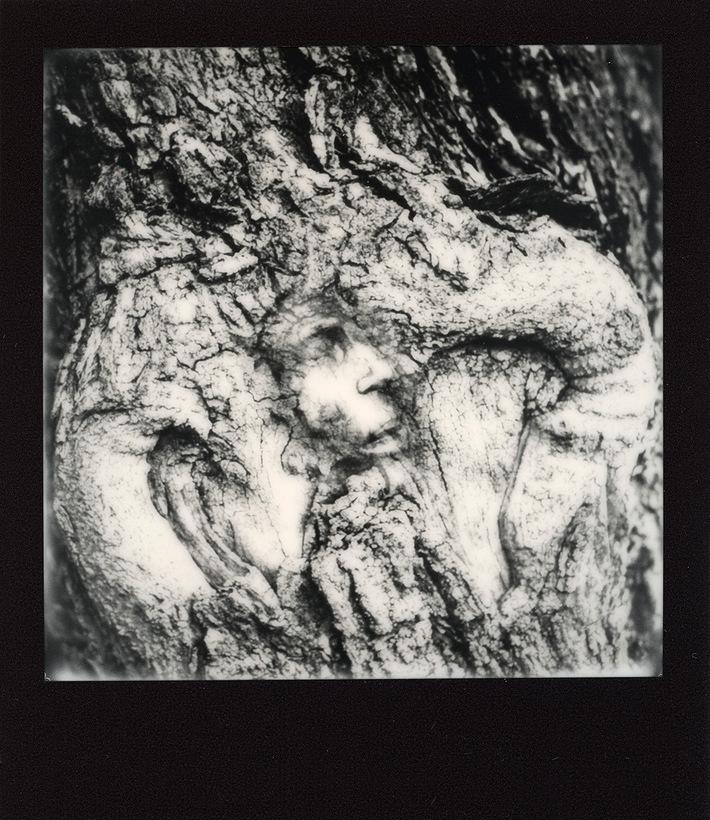 a face in the bark