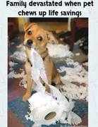 dog-toilet-paper