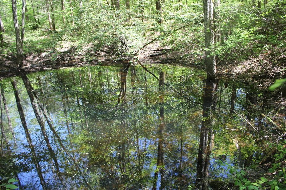 2nd sinkhole pond