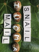 IOUMA snails wondering how they can get to the Post OfficeSnail Mail