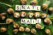 Lots of Snails for Snail Mail
