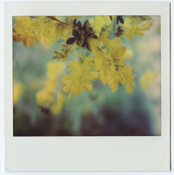 Ginestra - Ci vuole un fiore