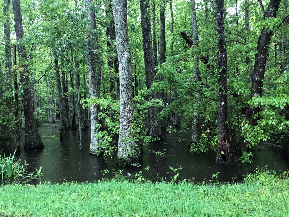 Griffin Swamp High Water.......5/21/2020