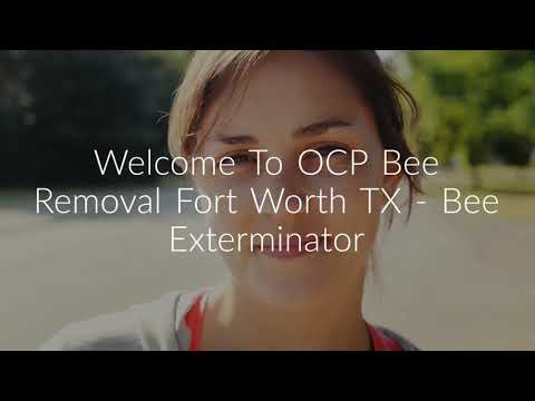 OCP Bee Removal in Fort Worth, TXOCP Bee Removal in Fort Worth, TX