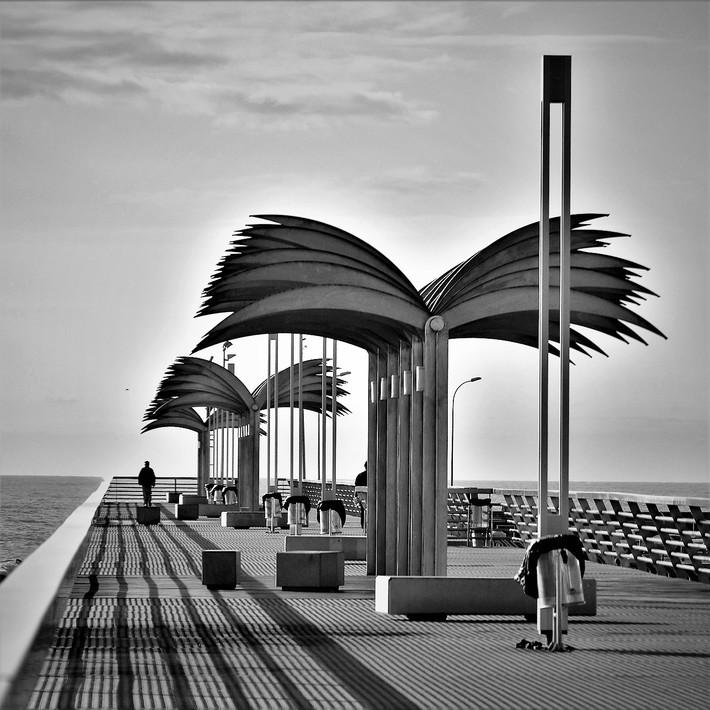 Alicante, città delle palme