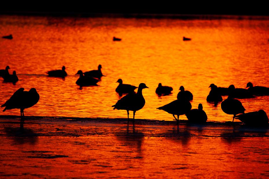 Sunrise at Waneka Lake - Lafayette, Colorado