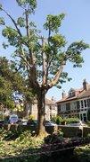 Tree off limits